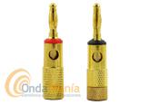 PAREJA DE BANANAS DORADAS MACHO DE COLOR ROJO Y NEGRO - Pareja de bananas doradas aéreas de color rojo y negro